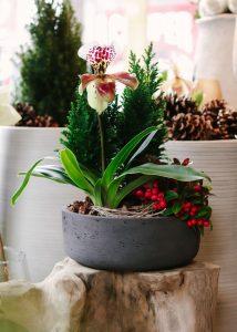 Back Bay Gift Guide: Lady Slipper Planting, Winston Flowers