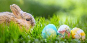 Taj Easter