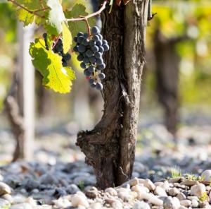 Bar Boulud Presents the Château LaTour-Martillac Wine Dinner @ Bar Boulud | Boston | Massachusetts | United States