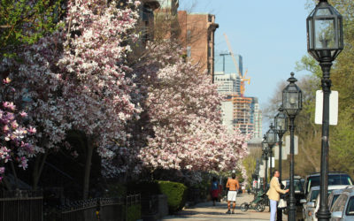 Thing to Do in Back Bay This Spring