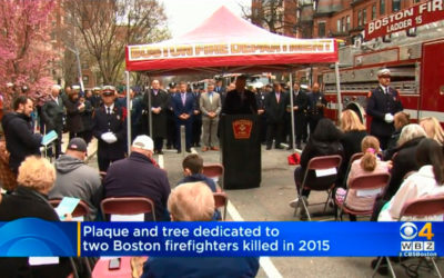 Cherry Tree and Shrine Dedicated as a Reminder of Fallen Boston Firefighters